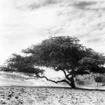 REYNALDO LUZA: COSTA PERUANA – FOTOGRAFÍAS 1950 – 1960
