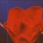 El rey de las rosas, de Werner Schroeter (1986)