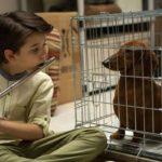 Wiener-dog, de Todd Solondz (2016)