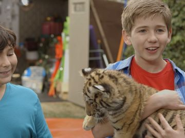 pelicula-un-tigre-en-casa